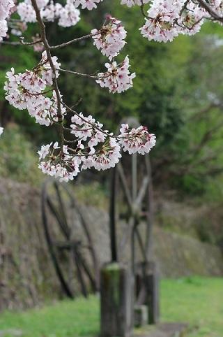 桜190412