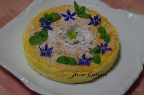 チーズケーキ190429