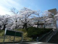 2019-04-20一関市役所千厩支所004