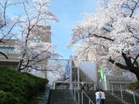 2019-04-20一関市役所千厩支所008