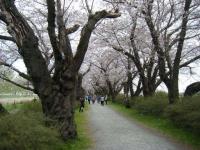 2019-04-21北上展勝地018