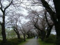 2019-04-21北上展勝地021