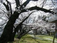 2019-04-20一関市役所千厩支所022