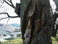 2019-04-20一関市役所千厩支所020