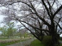 2019-04-21北上展勝地025
