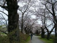 2019-04-21北上展勝地034