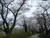 2019-04-21北上展勝地033