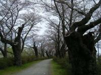 2019-04-21北上展勝地031
