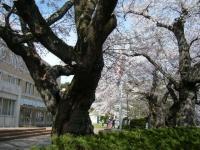 2019-04-20一関市役所千厩支所013