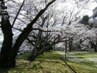 2019-04-20一関市役所千厩支所024