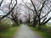2019-04-21北上展勝地041