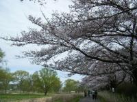 2019-04-21北上展勝地038