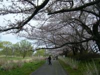 2019-04-21北上展勝地037