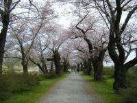 2019-04-21北上展勝地045