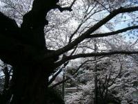 2019-04-20一関市役所千厩支所030