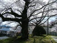 2019-04-20一関市役所千厩支所028