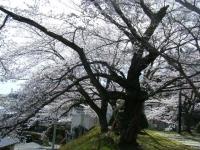 2019-04-20一関市役所千厩支所027