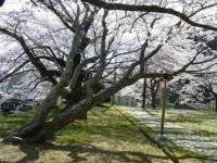 2019-04-20一関市役所千厩支所025