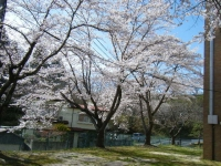 2019-04-20一関市役所千厩支所033