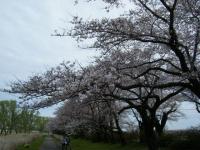 2019-04-21北上展勝地053