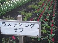 2019-04-27道の駅米山チューリップ013