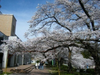 2019-04-20一関市役所千厩支所041