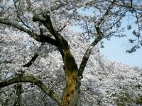 2019-04-20一関市役所千厩支所045