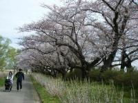 2019-04-21北上展勝地064