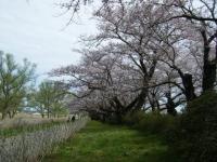 2019-04-21北上展勝地063