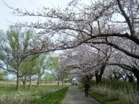 2019-04-21北上展勝地072
