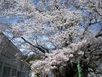 2019-04-20一関市役所千厩支所054