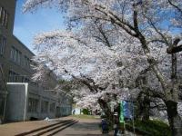 2019-04-20一関市役所千厩支所052