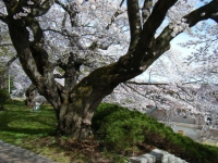 2019-04-20一関市役所千厩支所057