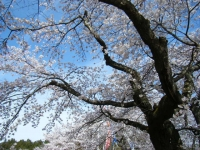 2019-04-20一関市役所千厩支所058
