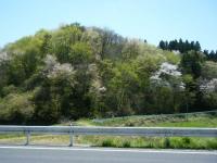 2019-05-05しろぷーうさぎ03