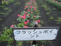 2019-04-27道の駅米山チューリップ059