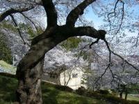 2019-04-20一関市役所千厩支所062