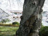 2019-04-20一関市役所千厩支所061