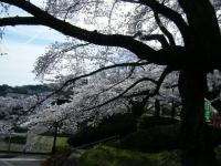 2019-04-20一関市役所千厩支所072