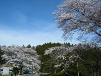 2019-04-20一関市役所千厩支所068