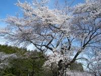 2019-04-20一関市役所千厩支所067