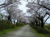 2019-04-21北上展勝地090