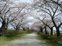 2019-04-21北上展勝地096