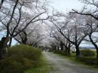 2019-04-21北上展勝地093