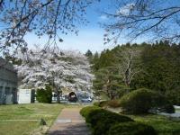 2019-04-20一関市役所千厩支所078