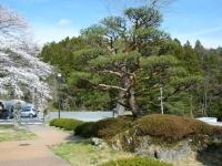 2019-04-20一関市役所千厩支所082