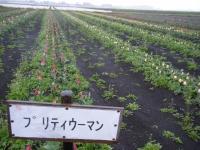 2019-04-27道の駅米山チューリップ079
