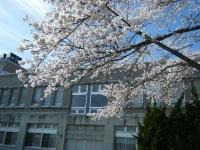 2019-04-20一関市役所千厩支所095