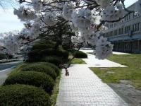 2019-04-20一関市役所千厩支所092