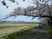 2019-04-21北上展勝地120
